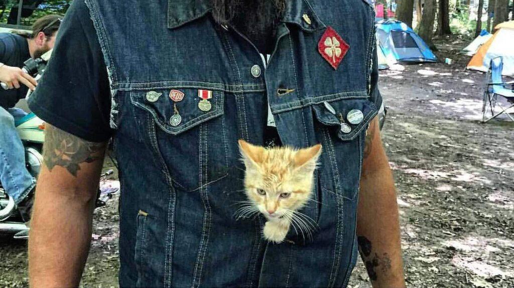 <p>Brännskadorna som Party Cat hade när Pat hittade honom har läkt fint.</p>