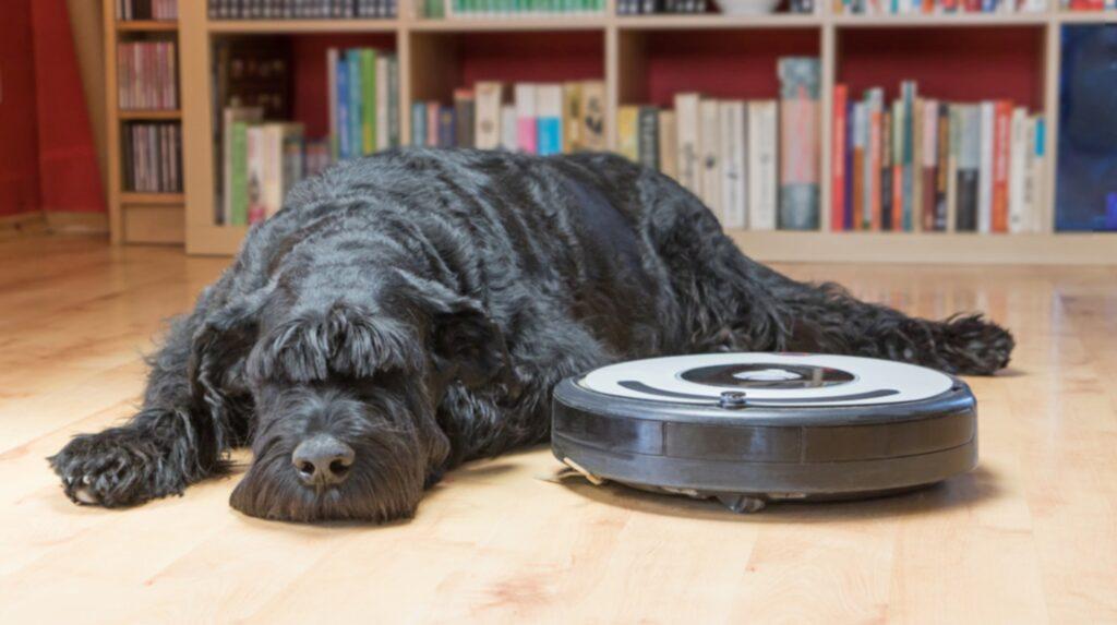 När Jesse Newton vaknade var hela vardagsrummet täckt med hundbajs. Förklaringen? Han hade glömt att robotsdammsugaren var på. (Hunden och dammsugaren på bilden har inget med artikeln att göra)