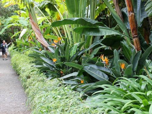 Botaniska trädgården i Puerto de la Cruz. (Tips: Martin Svensson)