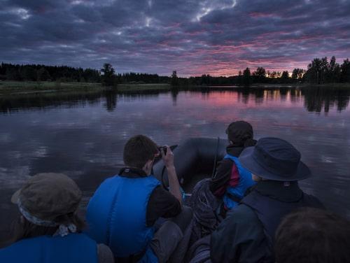 På ekoturismföretaget WildSweden har man några av landets bästa viltguider. De vet när, var och hur älgar och andra djur rör sig och är verksamma i ett av landets älgtätaste områden.