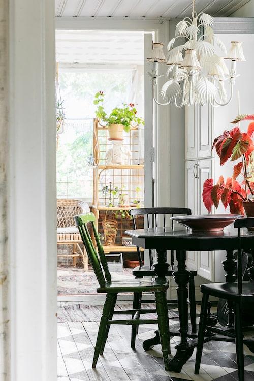 Runt köksbordet står ärvda pinnstolar ommålade i svart och grönt. På bordet står en bladbegonia. Från köket finns även en utgång ut till en glasveranda. Lampan är köpt på Sopstationen.
