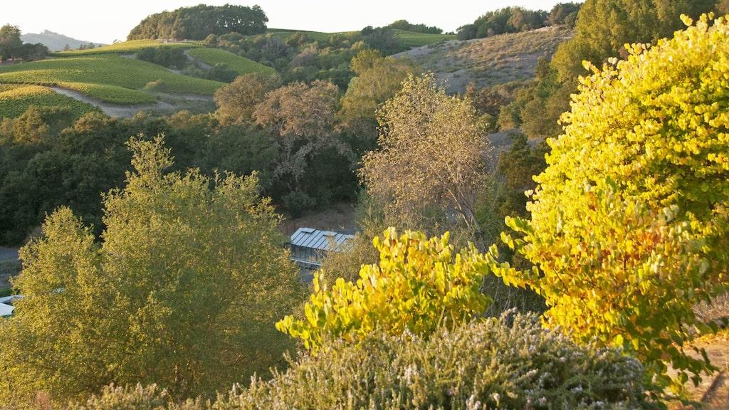 Förutom i Bourgogne trivs chardonnaydruvan även i Kaliforniens vingårdar.