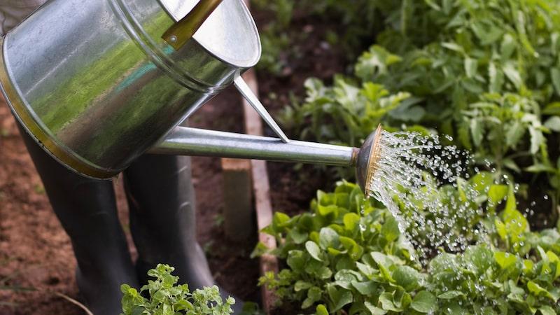 Odla i pallkrage har blivit väldigt populärt. Här tipsar vi om hur det gör det på allra bästa sätt.