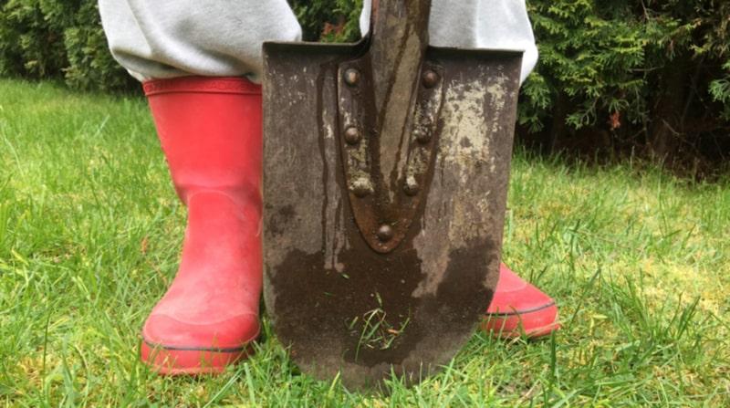 Nu kan du få rutavdrag för lättare trädgårdsarbeten vid ditt fritidshus.