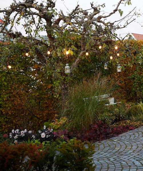 På hösten är trädgården fylld av djupa färgtoner och prunkande grönska. Trädgårdsbelysningen ger en ombonad och inbjudande känsla.