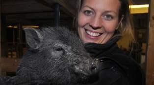 Plötsligt hade Maria 22 kultingar i grisflocken | Nyheter