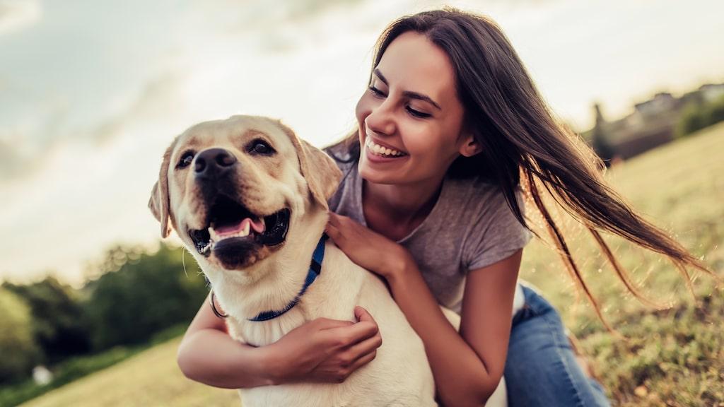 Det är ett stort ansvar att skaffa hund.