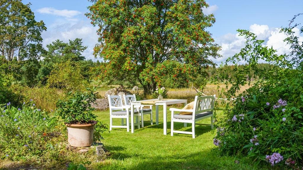 """Trädgården har många små """"oaser"""" och mycket grönska."""