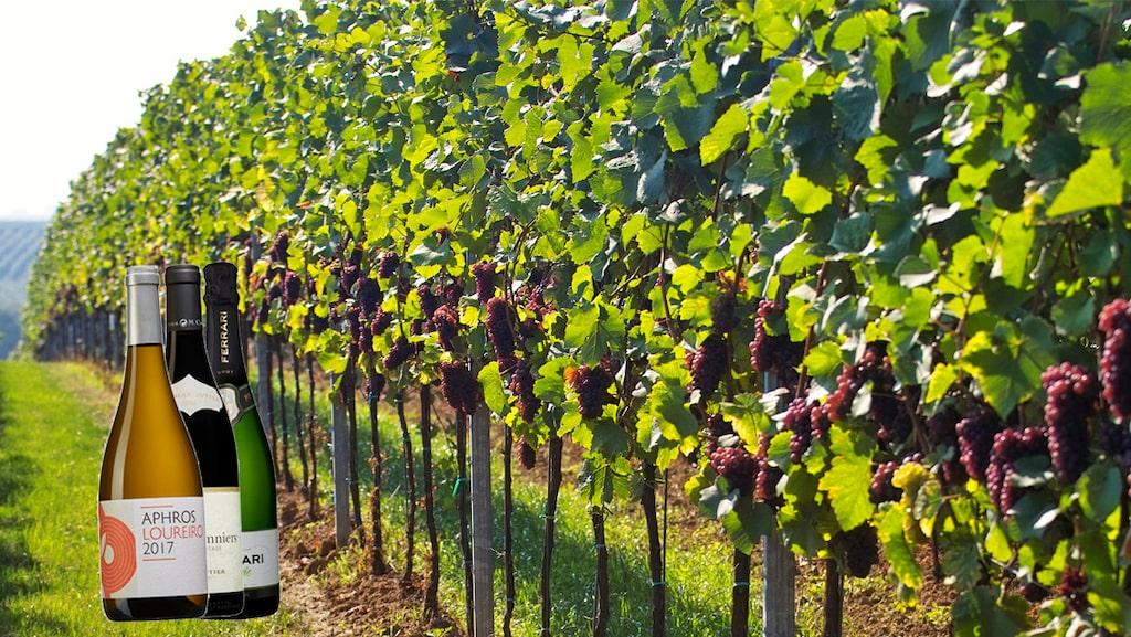 Expertjuryn bakom Allt om Vins tunga vinpris Årets vinare har röstat fram de fem bästa ekologiska på Systembolaget.