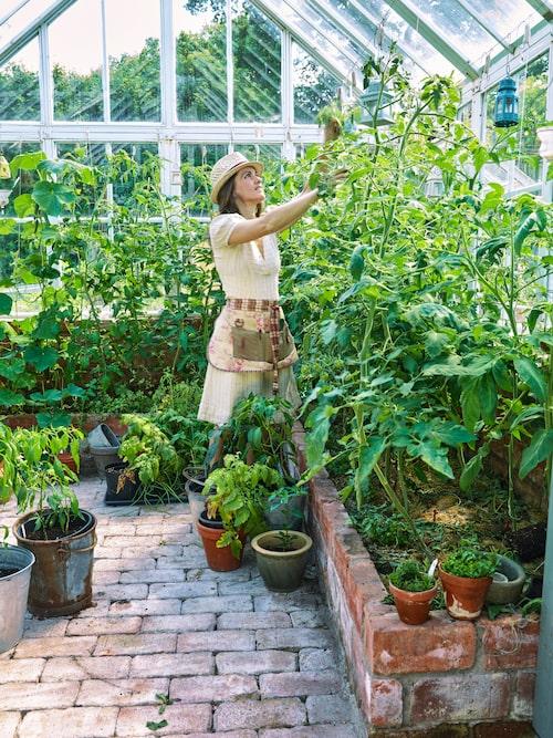 I växthuset odlas många olika sorters tomater och familjen brukar vara självförsörjande en bit in i januari.