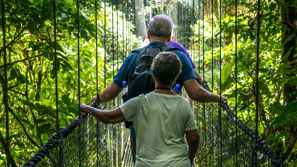 Vid vulkanen Arenal gör vi en utflykt till de hängande broarna i närheten och får ytterligare en glimt av regnskogens rikedom. Den väl underhållna promenadstigen över gungande hängbroar är en spännande upplevelse även för de som inte klarar av en mer strapatsrik djungelupplevelse
