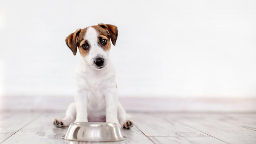 Att laga egen mat är lätt, prisvärt och tryggt att veta precis vad som hunden får i sig.