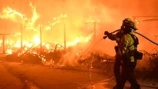 Danmark skakat av branderna