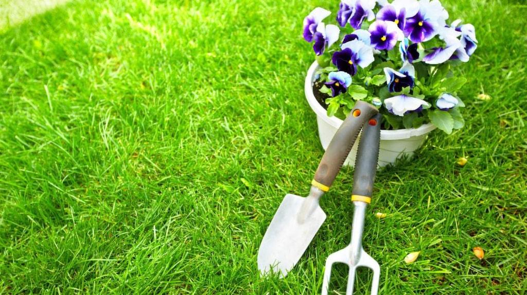 Det finns oändligt med husmorstips till din trädgård. Vad sägs om att använda tepåsar, blöjor eller äggskal för att din trädgård ska lbli ännu vackrare?