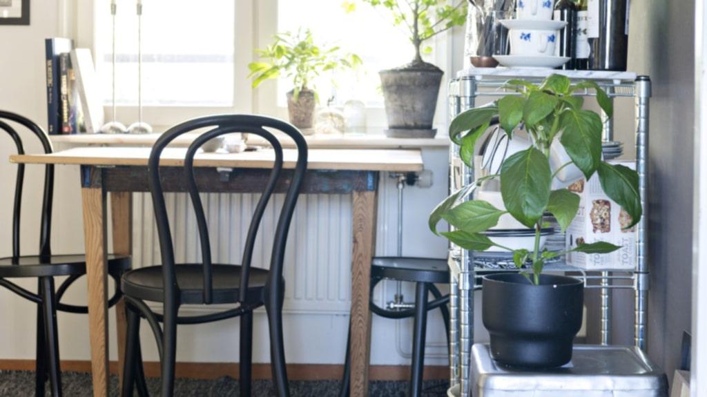 Kärt bord. Bordet i köket har Fridas farfars far tillverkat och är Fridas allra käraste möbel. Stolarna är Ikeas Öglan, köpta på Myrorna för 20 kronor styck och målade i mattsvart färg. Taklampan kommer från Lagerhaus och mattan från Ellos. På pallen står en jalapenoplanta.