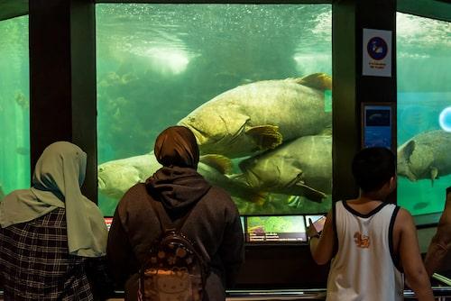 På Phuket Aquarium finns tusentals djur från den marina världen.