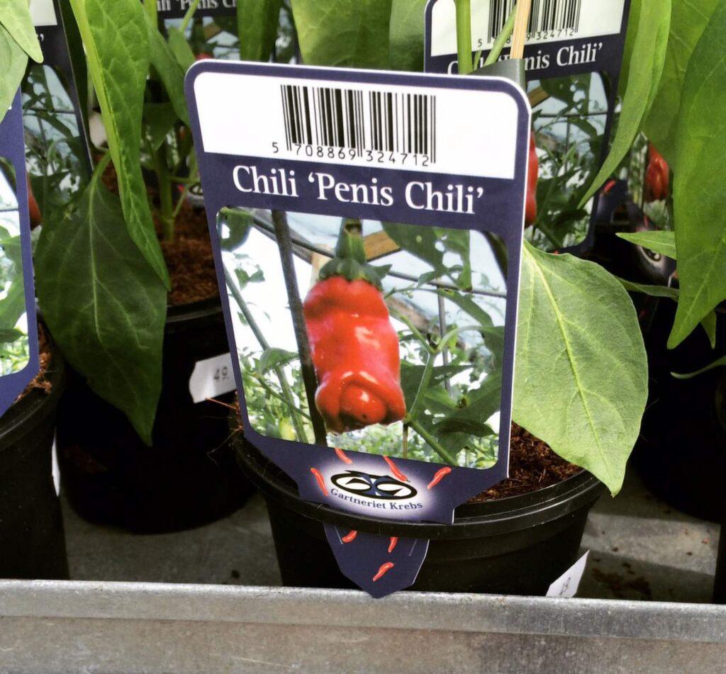 """Chilifrukten """"Penis chili"""" säljs både i affärer och på nätet. Den har förstås fått sitt namn efter sitt speciella utseende."""