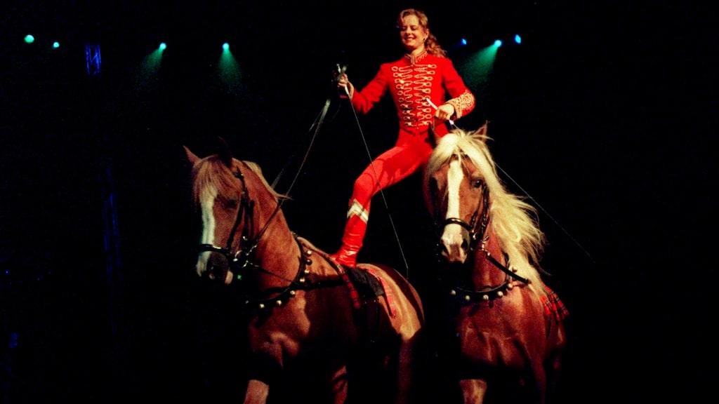 Klassiskt cirkusnummer - här är det Gabi Dew som rider på två hästar i full galopp på Cirkus Scott.