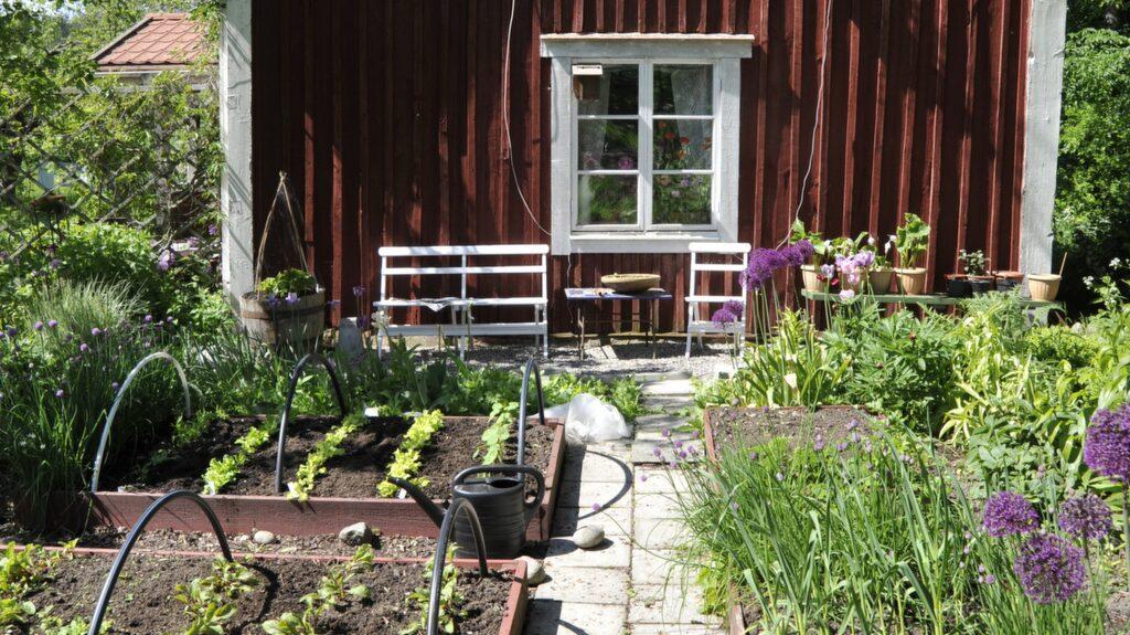 Ska du anlägga en helt ny köksträdgård med pallkragar ska du välja en solig och plan plats i trädgården, det ska helst inte vara stora träd i närheten rötterna kan bli jobbiga.