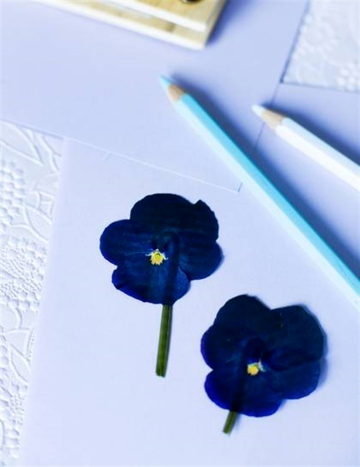 Pressa penséblommor i en blompress eller mellan två böcker. Sedan när de torkat kan du försiktigt klistra blommorna  på hård kartong. Voilà - fina presentkort!