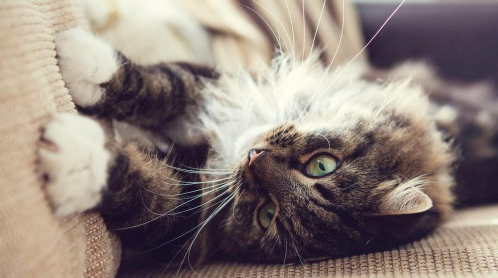 Har det hänt en kissolycka med ditt husdjur finns det smarta husmorstips för att få bort både kisset och lukten.