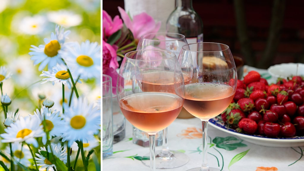Öl är populärt till midsommarmaten, men det finns även många fina viner som förgyller helgen.