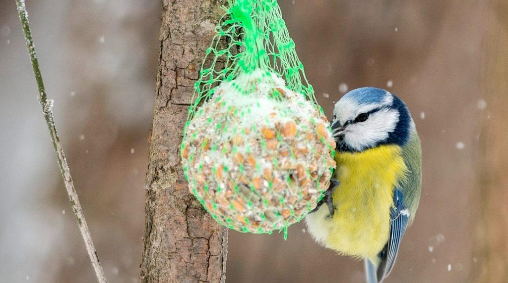 Nätet runt bollen kan fastna både i fåglarnas näbbar och klor och i hundarnas magar.