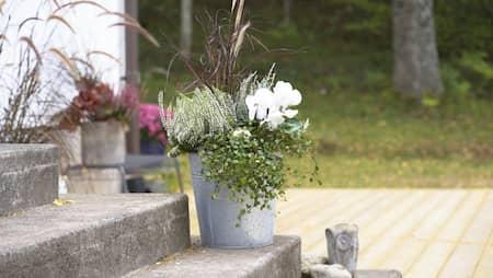 tåliga gröna växter utomhus