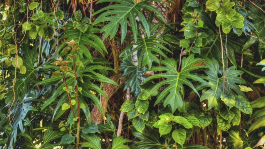 """Summer Rayne Oakes älskar växter och har över 500 i sitt hem i USA. """"Jag har nästan fördubblat min växtsamling på tre år, säger hon till metro.co.uk. Det är en form av besatthet kan man säga."""""""