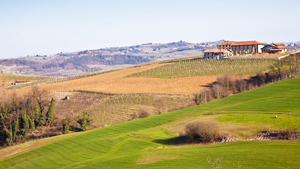 Barberadruvan odlas främst i Italien, framför allt i distriktet Piemonte.