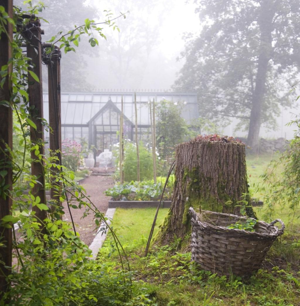 Växthus i dimma – trädgården är vacker i alla väder.