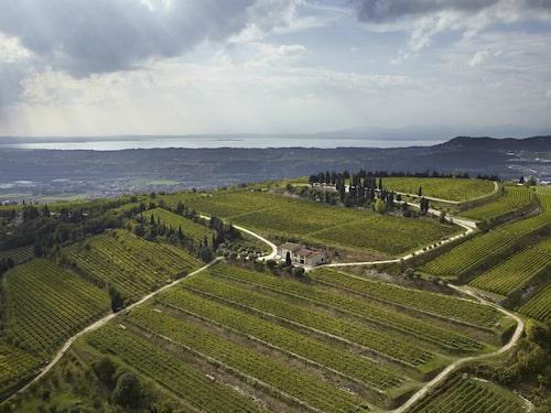 Allegrinis vingårdar ligger i Valpolicella i nordöstra Italien.