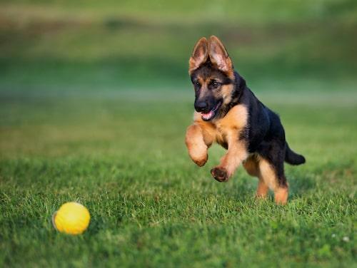 Daglig motion är viktigt för hunden