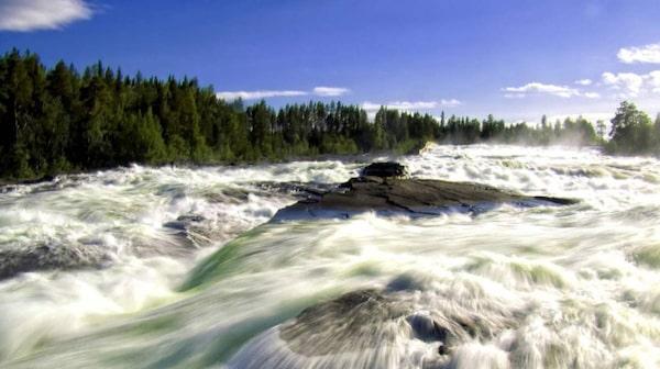 Storforsen. Piteälven är en av Sveriges fyra oreglerade nationalälvar, och vid Storforsen är den som allra mäktigast.