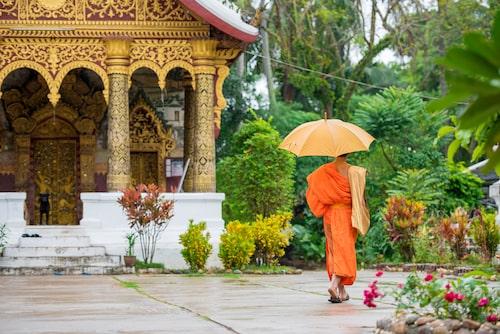 En munk i tempelstaden Luang Prabang.
