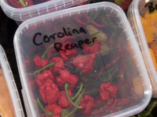 Carolina Reaper, världens starkaste chili enligt Guinness rekordbok.