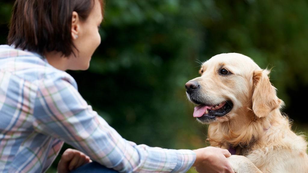Husdjur kan sänka blodtryck, hålla oss aktiva och minska smärta menar forskarna.