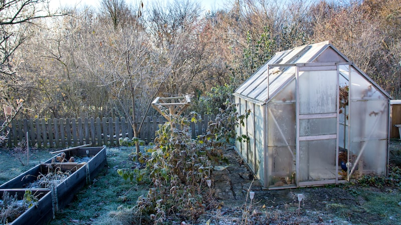 Du behöver inte vänta till tjälen gått ur marken för att odla. Allt som krävs för en varmbänk är tillräckligt med solljus.