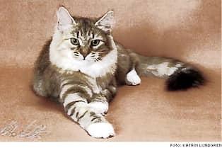 allergi vänlig katt